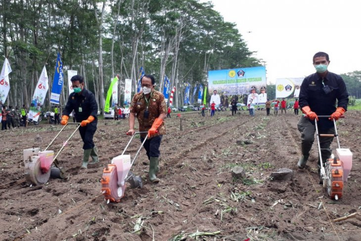 Peternak ayam di Blitar dapatkan pasokan jagung dari daerah lain