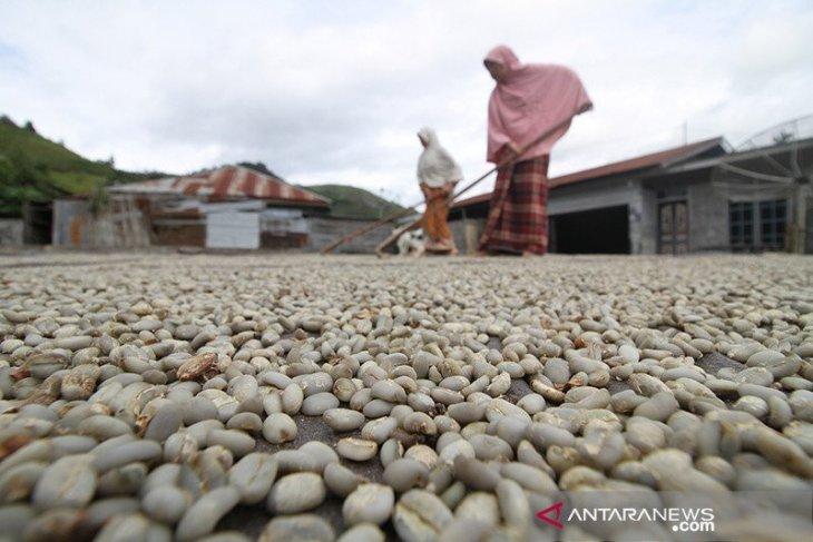 Permintaan ekspor sepi, kopi Gayo terus menumpuk di gudang