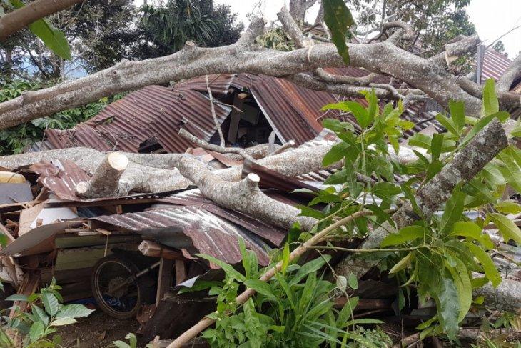 Pohon tumbang hancurkan satu rumah di Bener Meriah