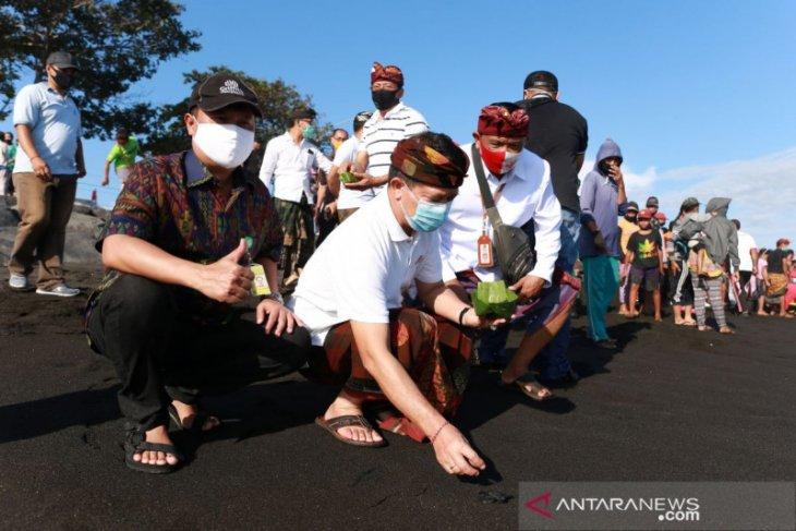 250 ekor tukik dilepasliarkan oleh Bupati dan Wakil Ketua DPRD Klungkung