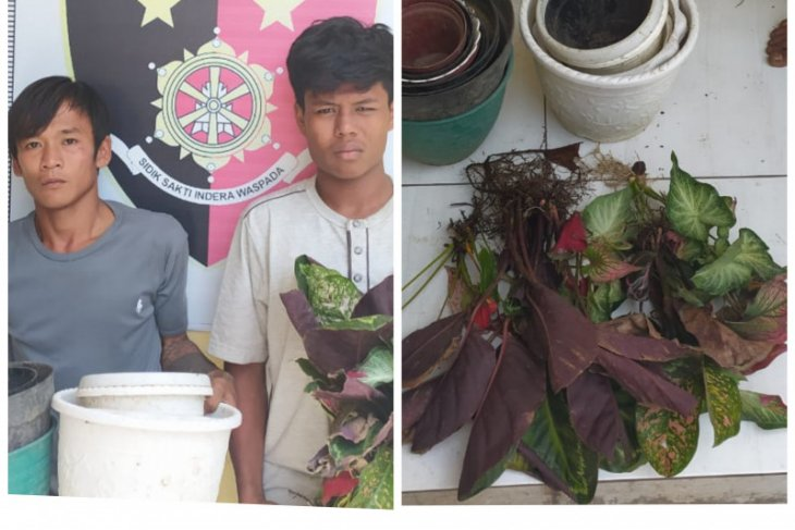 Polsek Binjai Utara amankan dua pencuri 20 batang bunga dan potnya
