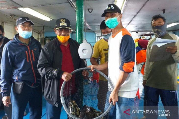 Dinas Perikanan Belitung lirik potensi budidaya lobster laut untuk ekspor