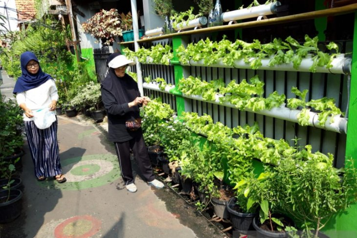 Urban farming can solve pandemic-triggered food issues: LIPI
