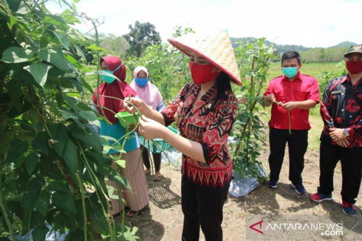 Karolin dorong masyarakat tanam sayuran di pekarangan rumah