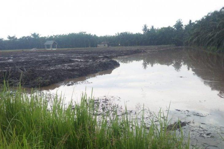 Warga Paya Perupuk Tanjung Pura  kembangkan budidaya ikan lele