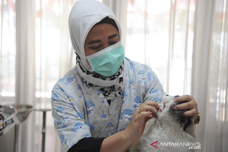 Vaksin rabies gratis bagi hewan peliharaan