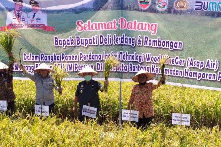 Pemkab apresiasi panen padi perdana  di Hamparan Perak