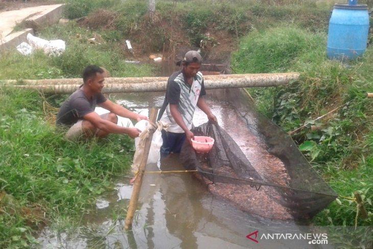 Petani Desa Belumai Rejang Lebong kembali budidayakan ikan pascabanjir