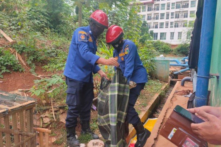 Ular sanca tiga meter dari  saluran air apartemen diserahkan ke komunitas pecinta reptil