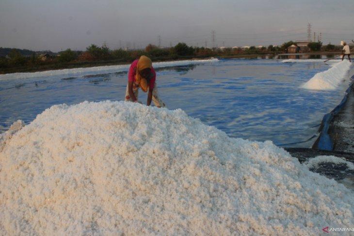Produksi garam rakyat Jatim turun