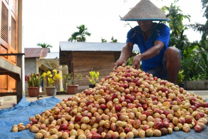 Pandemi COVID-19 berpengaruh harga jual buah pala, begini penjelasan petani Abdya