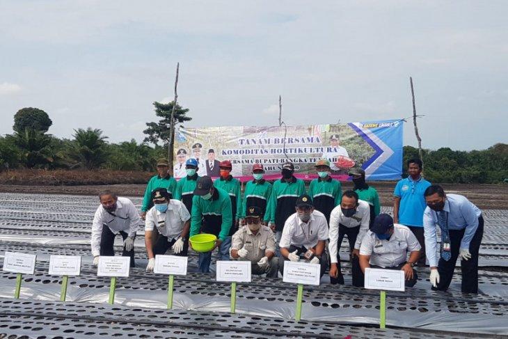 Pemkab Bangka Tengah salurkan 1.700 bibit bawang merah