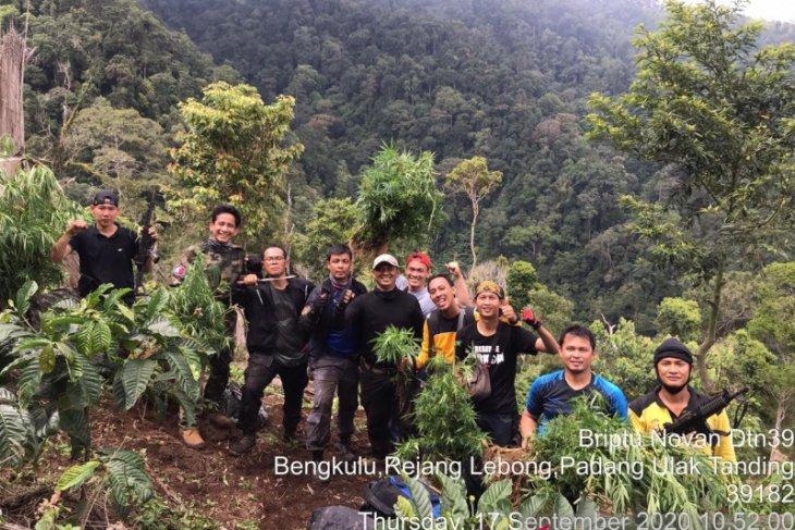 Two-hectare marijuana field in Bengkulu exposed during police raid
