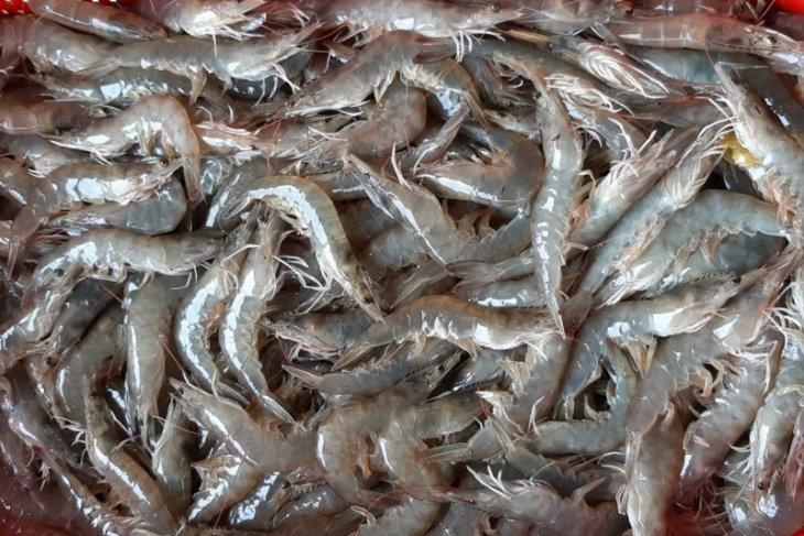 Menteri Edhy Prabowo: pendampingan dan modal jadi masalah korporasi nelayan