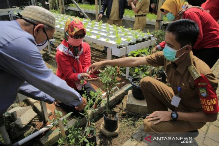 Hasil panenan KWT dibagikan kepada warga Tangerang terdampak COVID-19