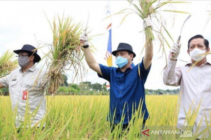 Hadi Mulyadi imbau petani tetap semangat di tengah pandemi COVID-19
