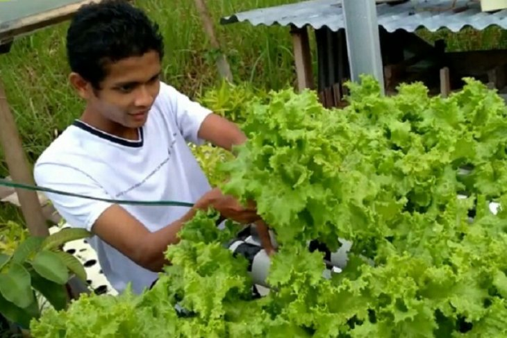 Roni Ariyanto, kembangkan sayuran hydroponik usung brand
