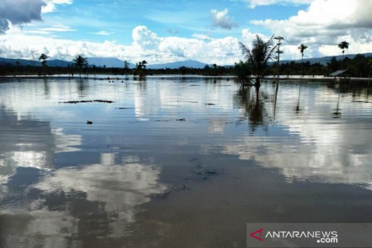 Puluhan hektare sawah siap tanam di Tapsel terendam banjir