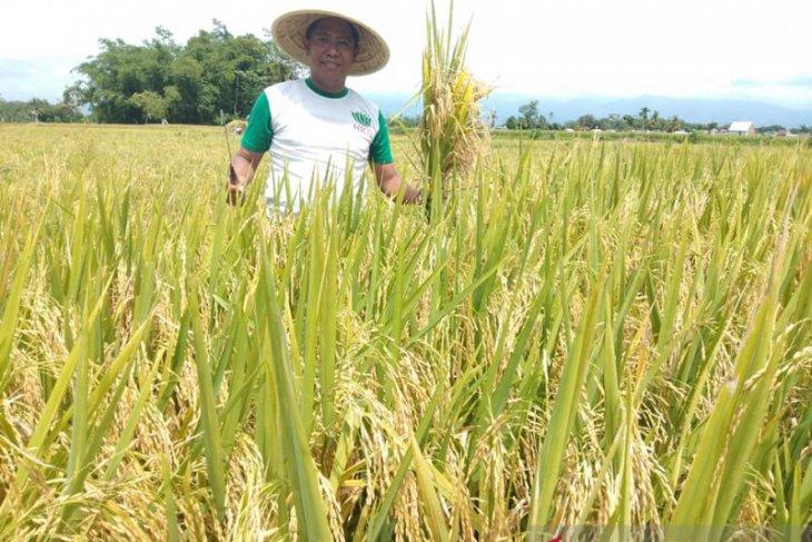 HKTI Jember sebut kebijakan pemerintah belum berpihak petani