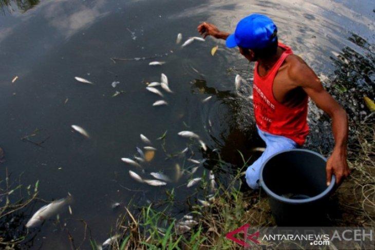 DLHK temukan dugaan pencemaran lingkungan PKS di Nagan Raya, begini jawaban GM PT KIM