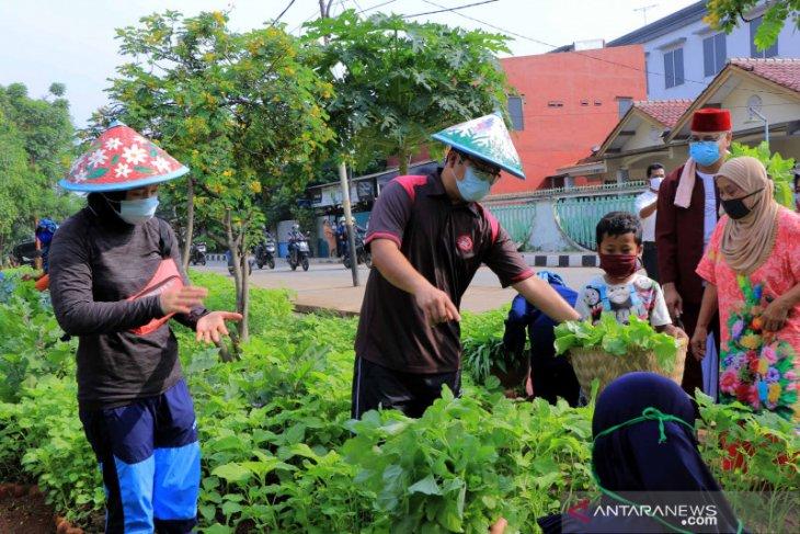 Wali Kota Arief  panen sayuran bersama warga di Ecofarm Mekarsari