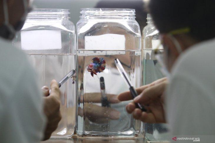 Kontes ikan cupang kelas internasional di Kediri