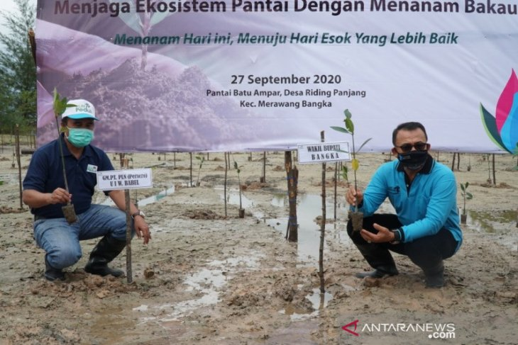 Ratusan volunter PLN Peduli tanam 2.000 pohon bakau