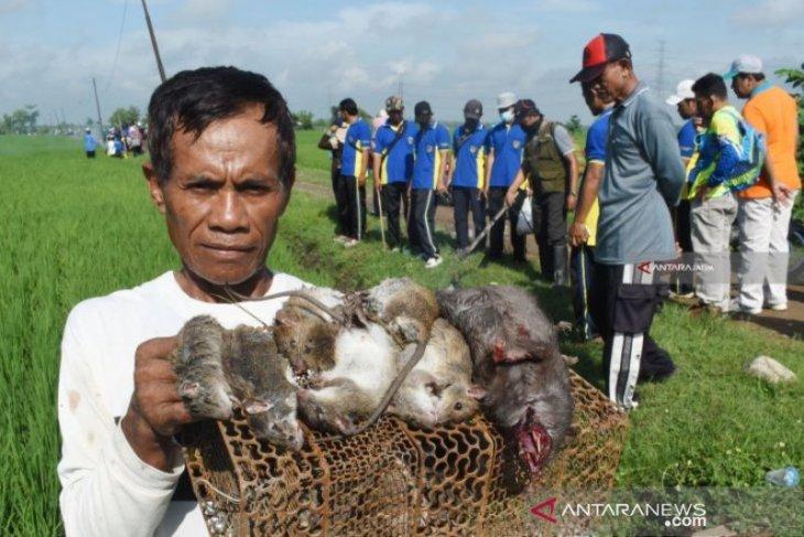 Polisi catat 24 kasus kematian manusia akibat tersengat listrik jebakan tikus di Ngawi