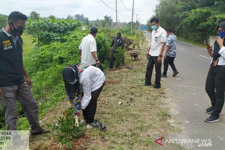 PLN Babel tanam 100 pohon di Pantai Pasir Padi