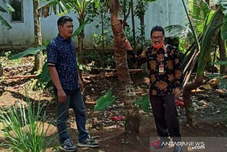 Pemprov Banten siapkan strategi peningkatan ekspor talas 'beneng'
