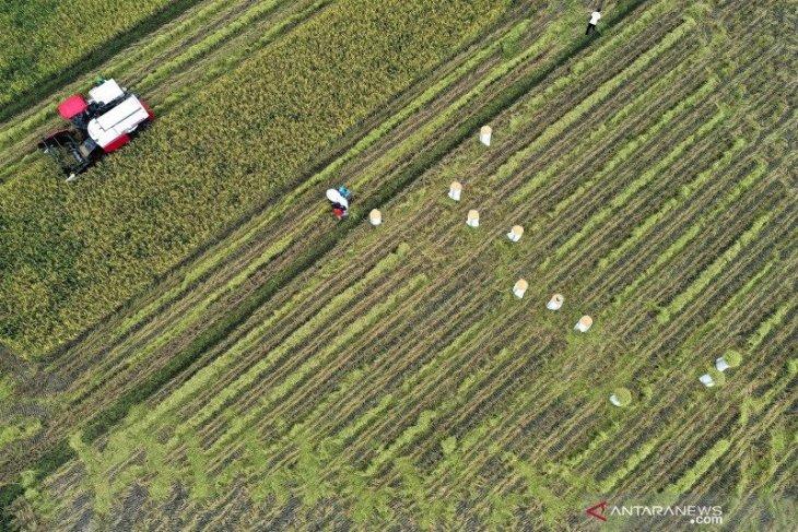 Presiden: Pertumbuhan sektor pertanian harus dijaga di tengah pandemi