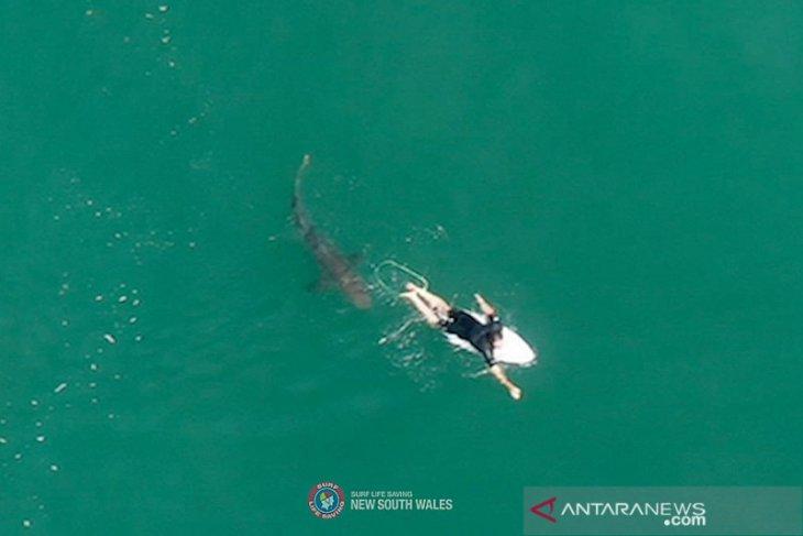 Seorang pria tewas akibat serangan hiu di Australia