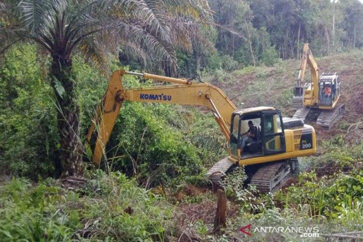 PTPN Grup gulirkan peremajaan kebun sawit di seluruh anak usaha