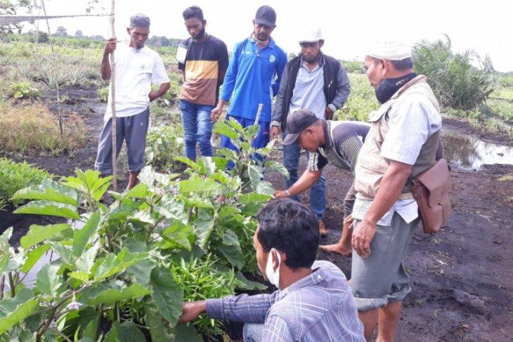 BRG gelar pelatihan pertanian ramah gambut