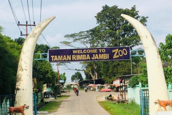 Alfa tinggal sendirian, Yanti gajah betina di Taman Rimba Jambi mati