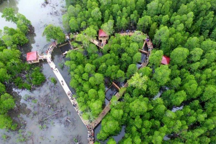 Indonesia, UAE agree to start cooperation in mangrove rehabilitation