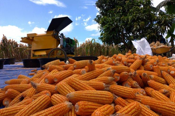 Bupati optimis pertanian di Tapin tiga kali panen dalam setahun