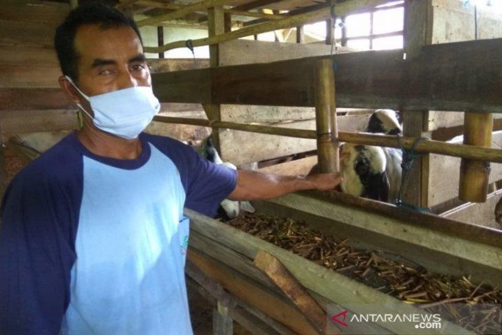 Indocement dukung peternak kambing produk pakan ternak sendiri
