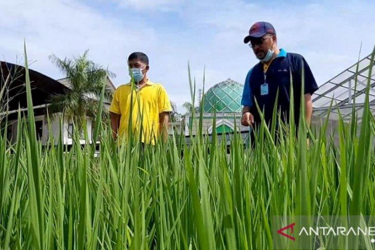 Provinsi Kalbar dapat perluasan areal tanam padi Kementan seluas 21.736 hektare