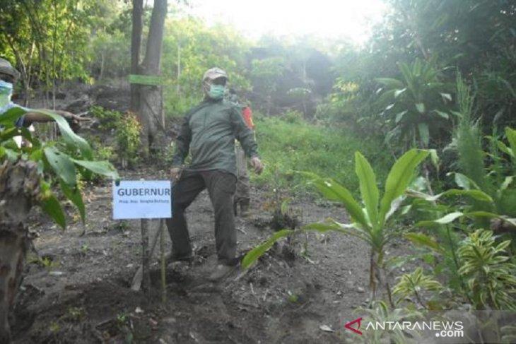 Gubernur Kepulauan Babel tanam 1.000 pohon buah di destinasi wisata Bukit Kejora