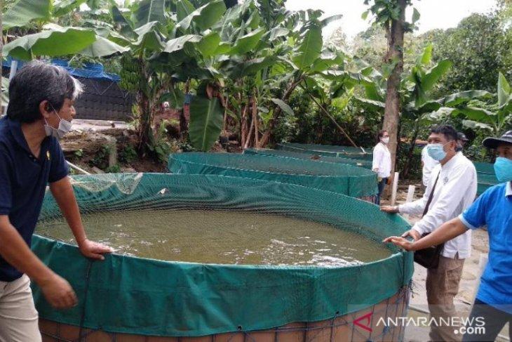Permintaan lele di Bali meningkat di tengah COVID-19