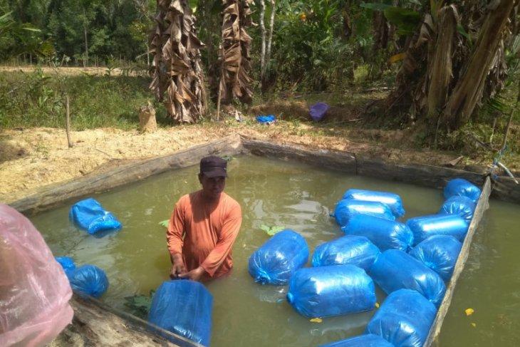 Dinas Perikanan Paser beri  bantuan 16.500 bibit lele
