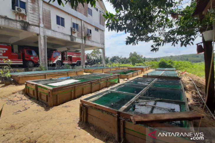 Satpol PP Kabupaten Landak manfaatkan lahan kantor untuk budidaya lele