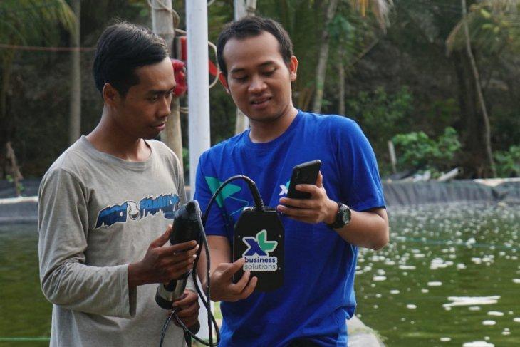 XL Axiata bangun solusi IoT tingkatkan kualitas budidaya ikan-udang