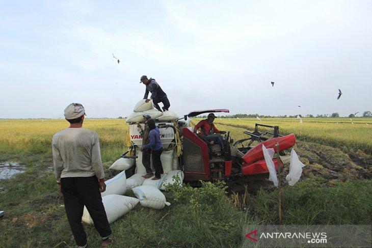 Produksi padi Nasional