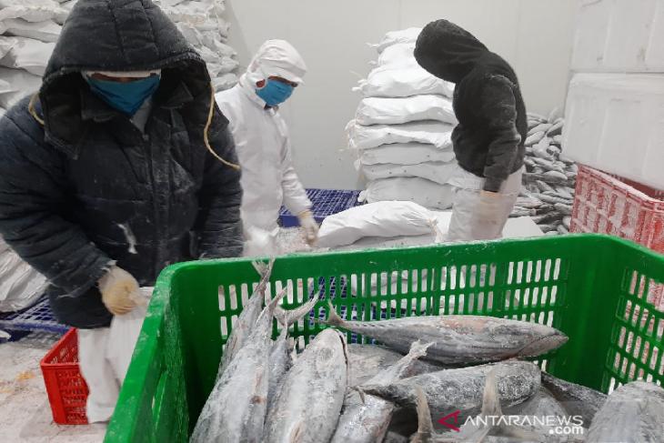 Pandemi, permintaan ekspor tuna ke Jepang menurun, ke Jawa meningkat
