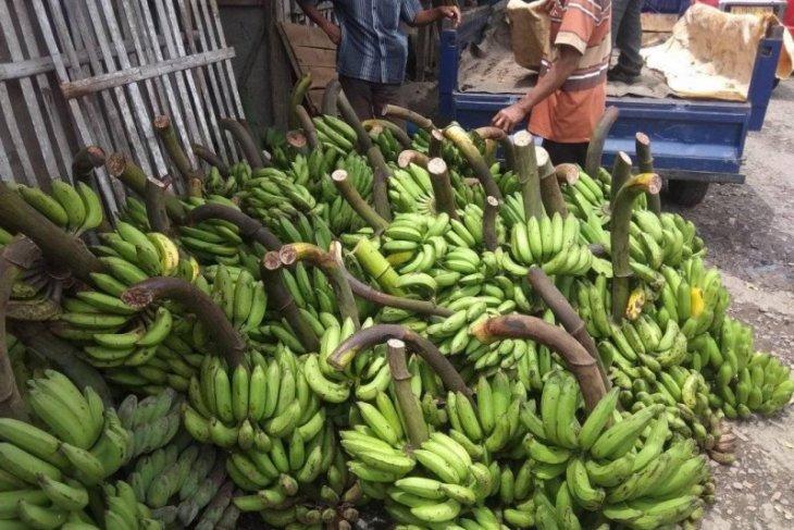 Omzet pedagang pisang di Lebak meningkat ditengah pandemi