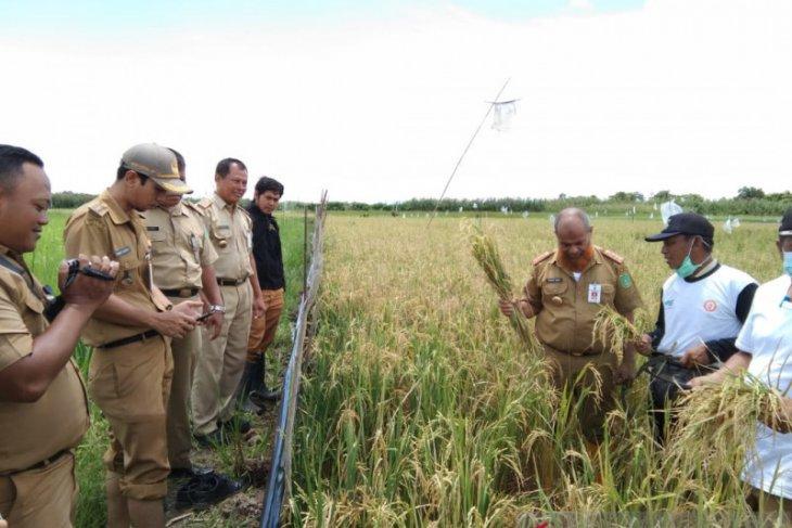 Tanah Bumbu fulfills food self-sufficiency