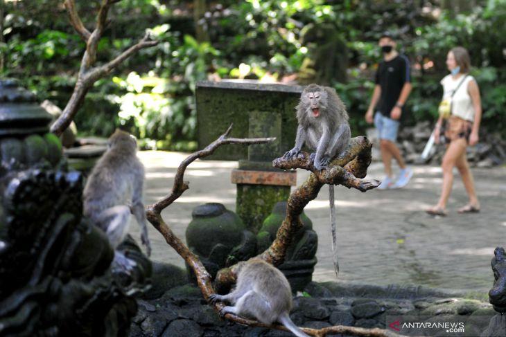 Syarat kunjungan ke Bali tak pengaruhi pemesanan hotel di RedDoorz