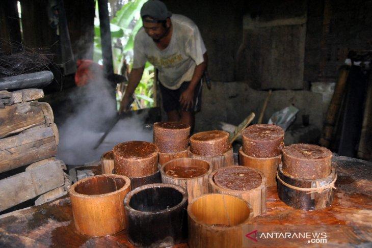 Desa Pedawa di Buleleng gencar tanam pohon aren